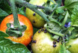 how-to-get-rid-of-pests-without-any-pesticides